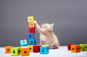 kitten-playing