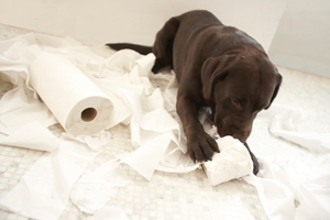 puppy playing with paper